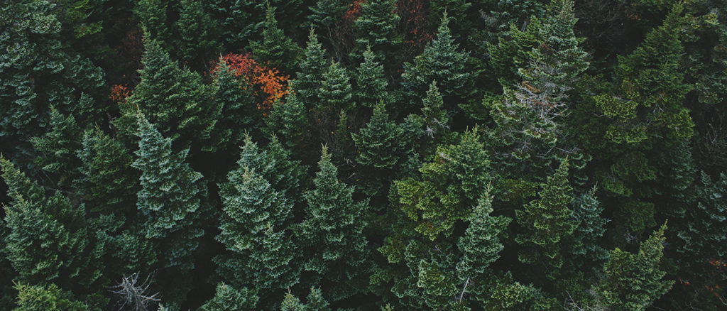 Pictue of a forest
